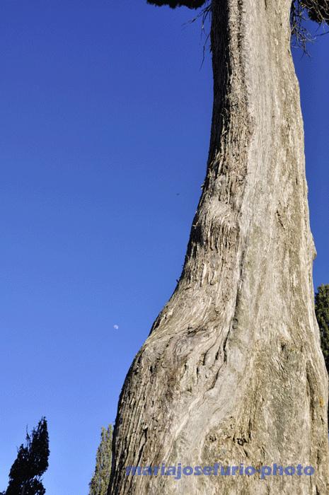 cipres-y-luna